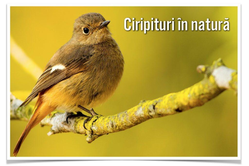 ciripituri-in-natura-cover-site-web