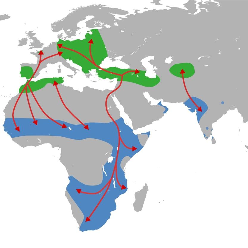 Harta migratiei berzelor